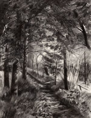 Saltburn Woods